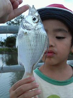 こんな綺麗な魚も!
