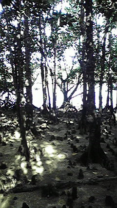 石垣島にもあります